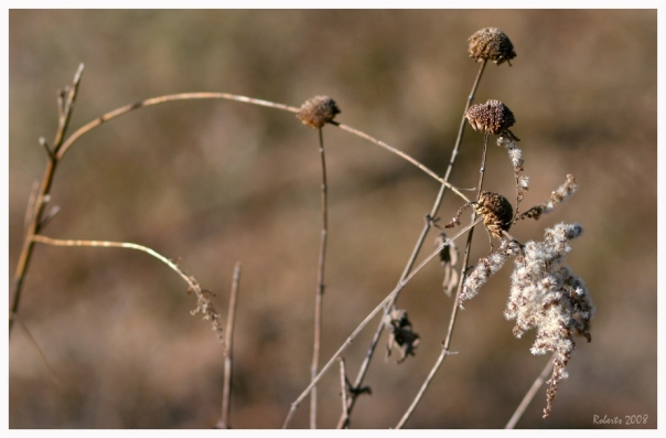 winterweeds